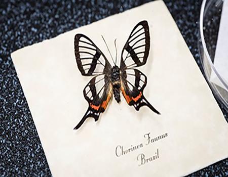 الهام از بال پروانه برای ساخت نانوپوشش ضدانعکاس